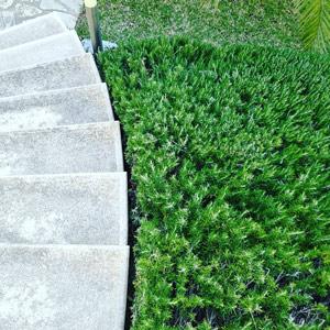 SpaConcept Mallorca - GartenConcept - Gartenpflege aus Leidenschaft!